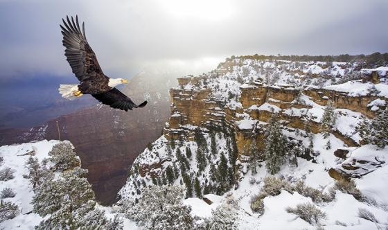 Aguila Volando Montaña Fabula Aguila Gallina